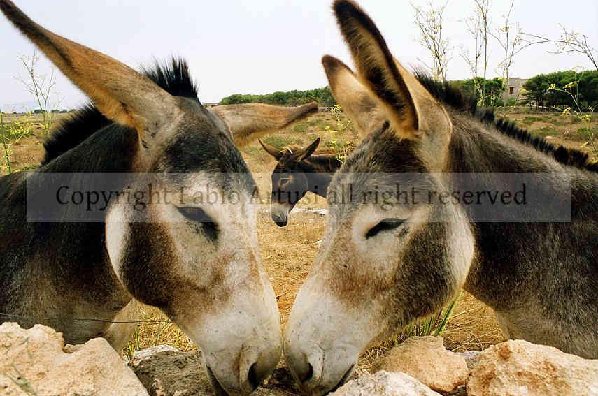 Ritratto di mulo    data : agosto 2007